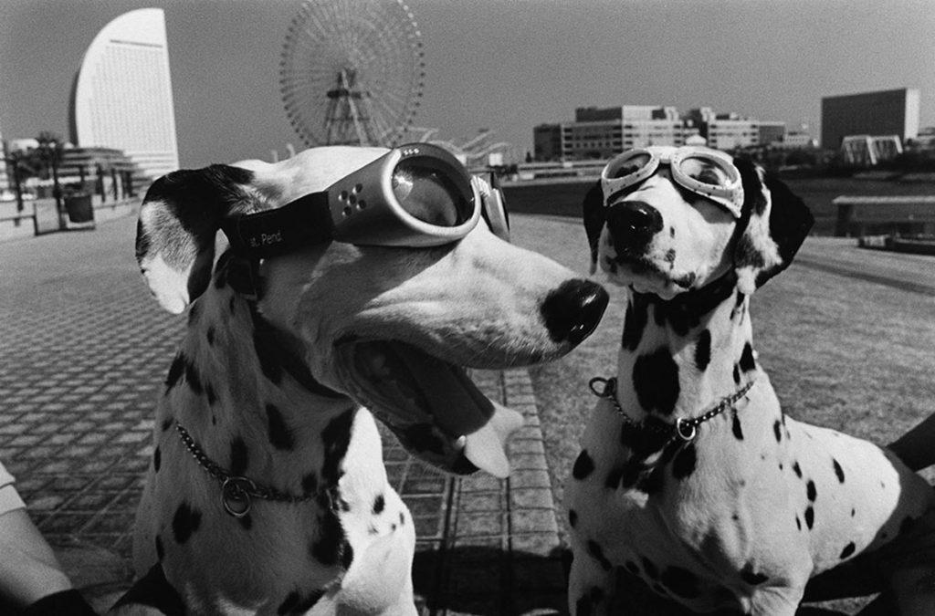 Elliott-Erwitt-Dogs-Yokohama